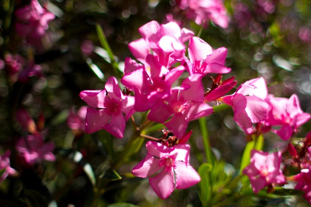 Bahar ve doğanın uyanışı