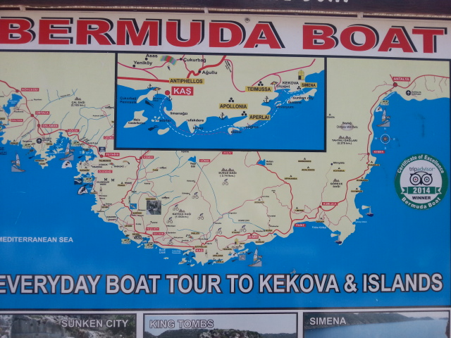 Bermuda tur- koylar